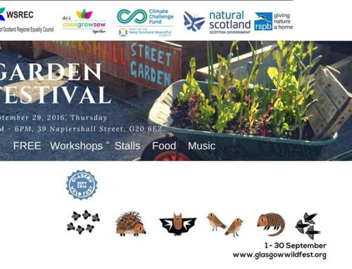 Coming up : WILDFEST at Napiershall St Garden